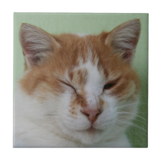 Cute Bi Color Cat Winking Tile