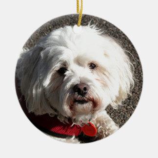 Cute bichon frise dog ceramic ornament