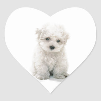 Cute Bichon Frise Stickers