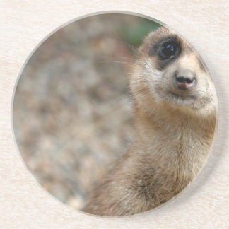 Cute Big-Eyed Meerkat Coaster