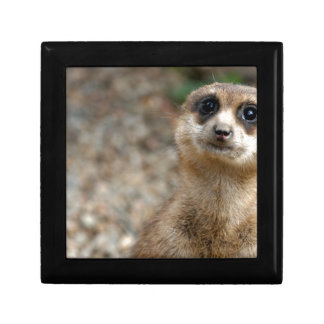 Cute Big-Eyed Meerkat Gift Box