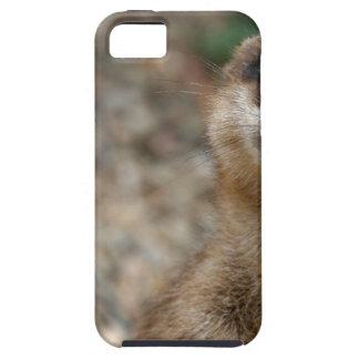 Cute Big-Eyed Meerkat iPhone 5 Cases