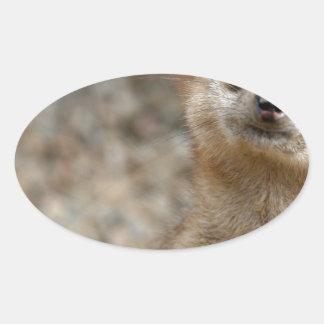 Cute Big-Eyed Meerkat Oval Sticker