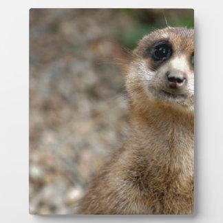 Cute Big-Eyed Meerkat Plaque