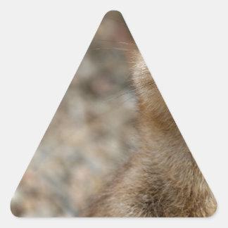 Cute Big-Eyed Meerkat Triangle Sticker