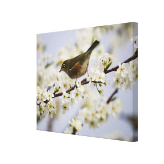 Cute Bird and Cherry Blossom Gallery Wrap Canvas