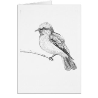 Cute Bird that catches everyone's attention. Card