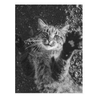 Cute Black and White Cat Hug Postcard
