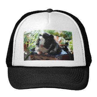 Cute Black and White Guinea Pig Cap