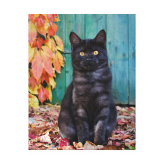 Cute Black Cat Kitten with Red Leaves Blue Door :: Canvas Print