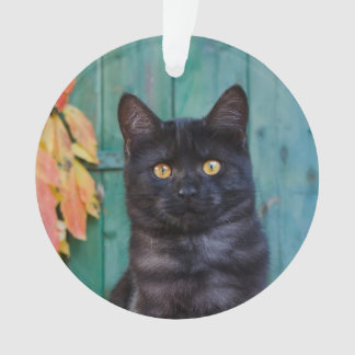 Cute Black Cat Kitten with Red Leaves Blue Door '' Ornament