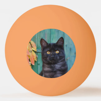 Cute Black Cat Kitten with Red Leaves Blue Door ** Ping Pong Ball