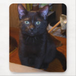 Cute  Black Cat  Mousepad