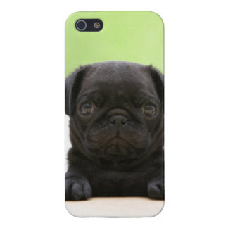 Cute Black Pug Puppy Phone Case Case For iPhone 5/5S