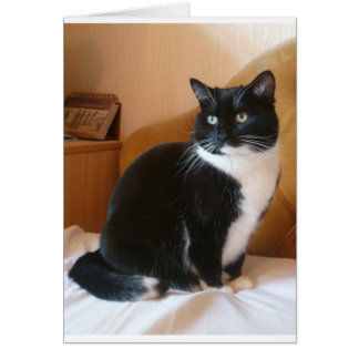 Cute black & white cat on bed card