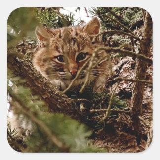 Cute Bobcat Kitten in a Tree Square Sticker