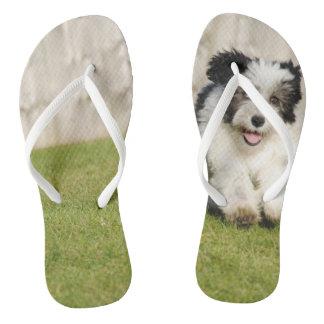 Cute Bobtail Sheepdog Thongs