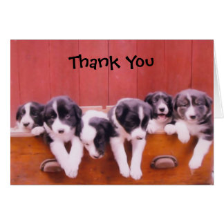 Cute Border Collie Puppies Thank You Card