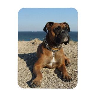 Cute Boxer Dog  Premium Magnet Magnet