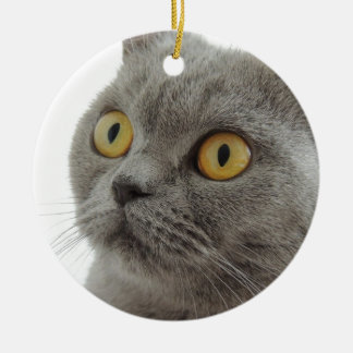 Cute British Shorthair cat Ceramic Ornament