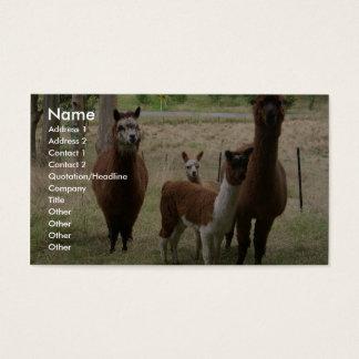 Cute Brown Alpacas In The Zoo Business Card