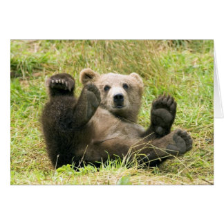 Cute brown grizzly bear cub photo blank card