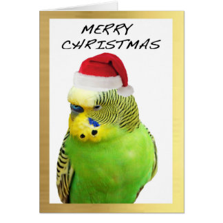 """Cute Budgie"" design Christmas cards"