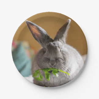 Cute Bunny Rabbit Eating Salad Paper Plates
