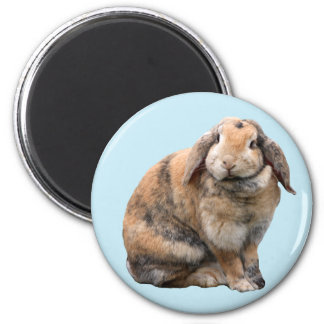 Cute bunny rabbit lop-eared magnet, gift idea 6 cm round magnet