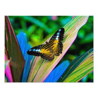 Cute Butterfly Photo Art