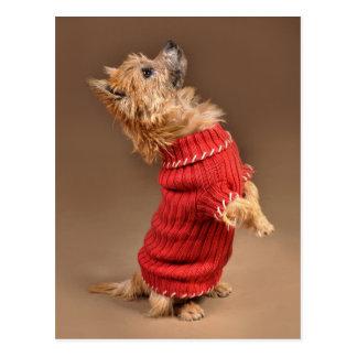 Cute Cairn Terrier Postcard