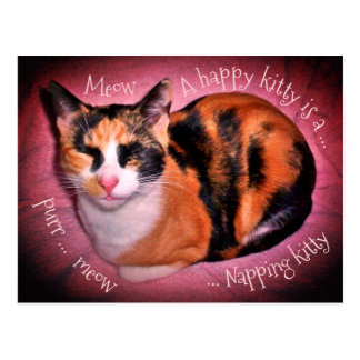 Cute calico cat postcard