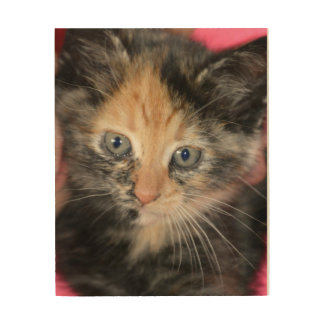 Cute Calico Kitten Wood Wall Art