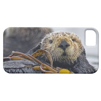 Cute California Sea Otter  Enhydra lutris Case For The iPhone 5