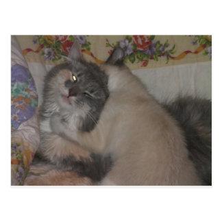 cute cat and playful kitten postcard