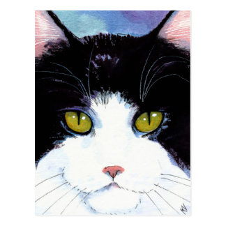 Cute cat black & white tuxedo Maine Coon postcard