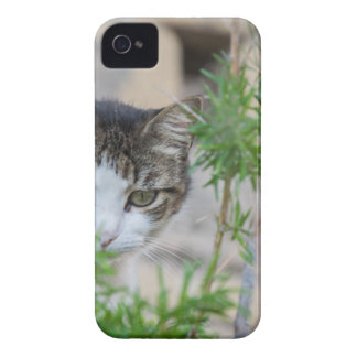 Cute cat for every day Case-Mate iPhone 4 case