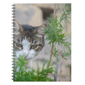Cute cat for every day spiral notebook