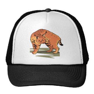 Cute Cat Hats