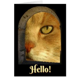 Cute Cat Hello Hi Card