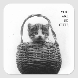 Cute Cat in a Basket Vintage Photo Square Sticker