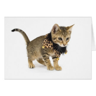 Cute Cat Leopard Print Collar Birthday Card