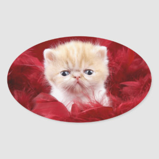 cute cat oval sticker