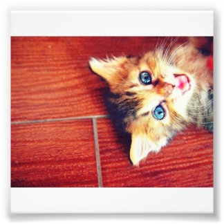 Cute cat photo print