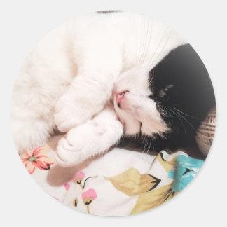 Cute Cat Photo Stickers