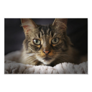 Cute Cat Portrait Photo Print