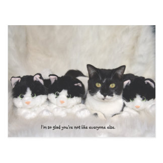 Cute Cat Postcard