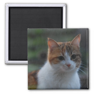 Cute Cat Square Magnet