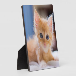 Cute Cat With Blue Eyes Photo Plaque