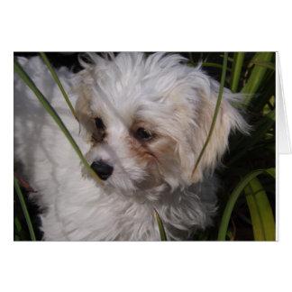 Cute Cavachon Puppy Card